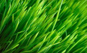 Lawn Care Grapevine TX