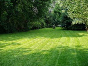 Fertilization & Weed Control Grapevine TX