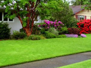 Fertilization & Weed Control Midcities TX